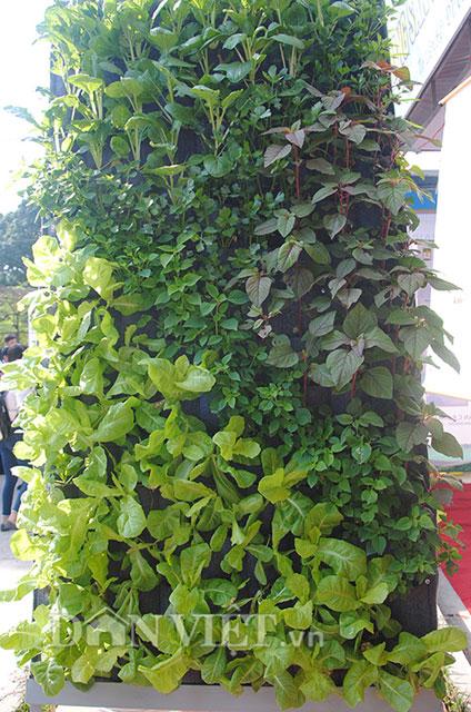 Mê mẩn vườn treo rau sạch thông minh dành cho nhà chật-1