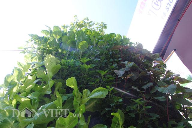 Mê mẩn vườn treo rau sạch thông minh dành cho nhà chật-3