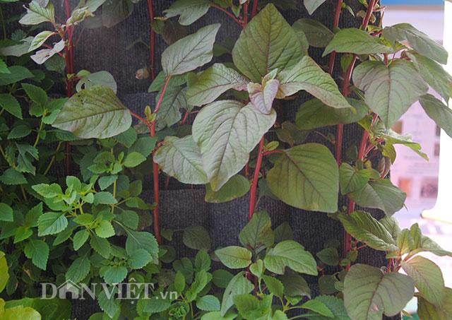 Mê mẩn vườn treo rau sạch thông minh dành cho nhà chật-4