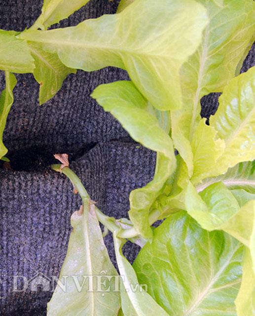 Mê mẩn vườn treo rau sạch thông minh dành cho nhà chật-6