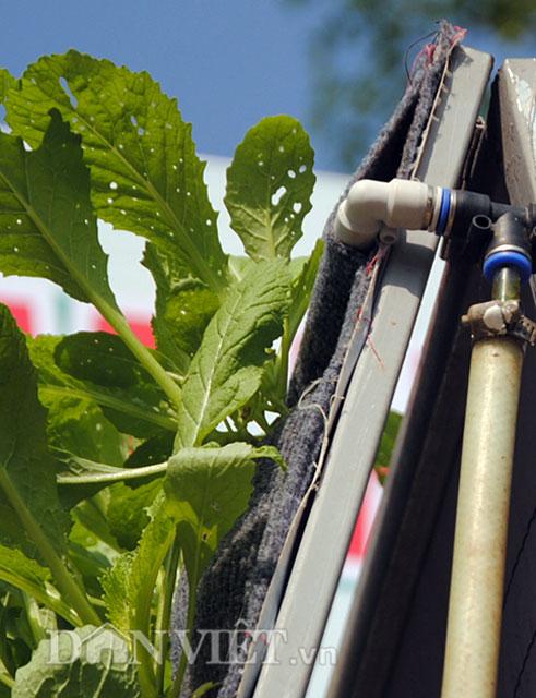 Mê mẩn vườn treo rau sạch thông minh dành cho nhà chật-8