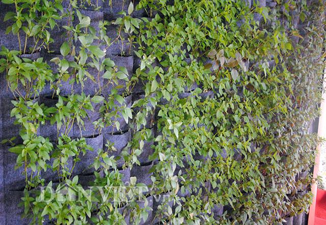 Mê mẩn vườn treo rau sạch thông minh dành cho nhà chật-10