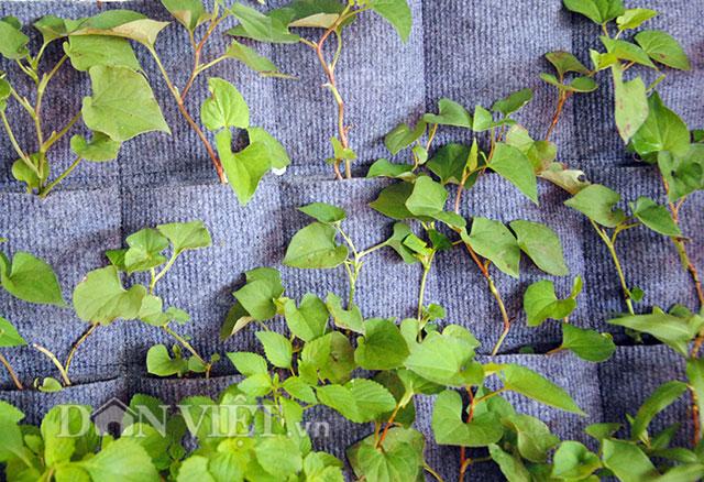 Mê mẩn vườn treo rau sạch thông minh dành cho nhà chật-11