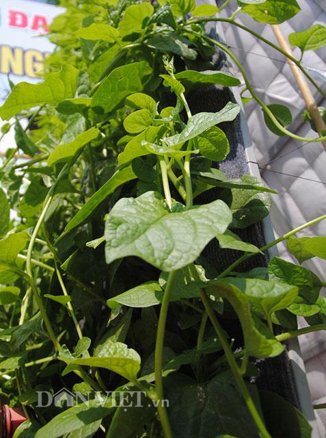 Mê mẩn vườn treo rau sạch thông minh dành cho nhà chật-14