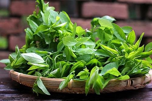 Phân biệt rau ngót sạch và rau ngót phun thuốc kích thích-2