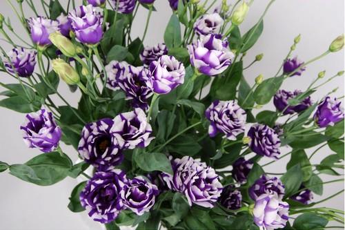 """10 loài hoa đắt đỏ, """"hiếm có khó tìm"""" nhất trên thế giới - 1"""