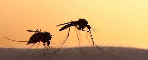 protein giup ngan chan su bung phat cua virus zika - 1