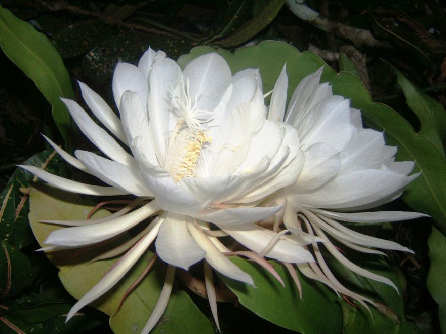 Vượt qua 27000 ứng cử viên, đây là 10 loài hoa vừa hiếm, vừa đẹp-1