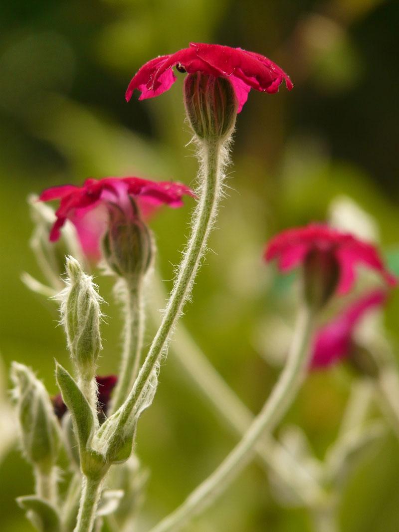 Vượt qua 27000 ứng cử viên, đây là 10 loài hoa vừa hiếm, vừa đẹp-2