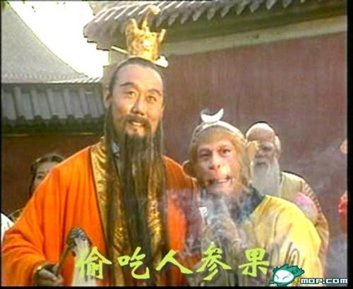 """dai tien trong an trom qua nhan sam cua """"tay du ky"""" qua doi - 1"""