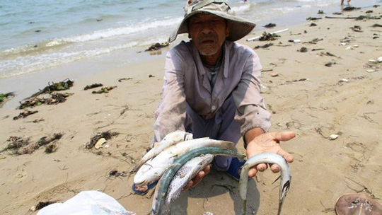 Xả độc làm cá chết, Formosa bồi thường 500 triệu USD-6