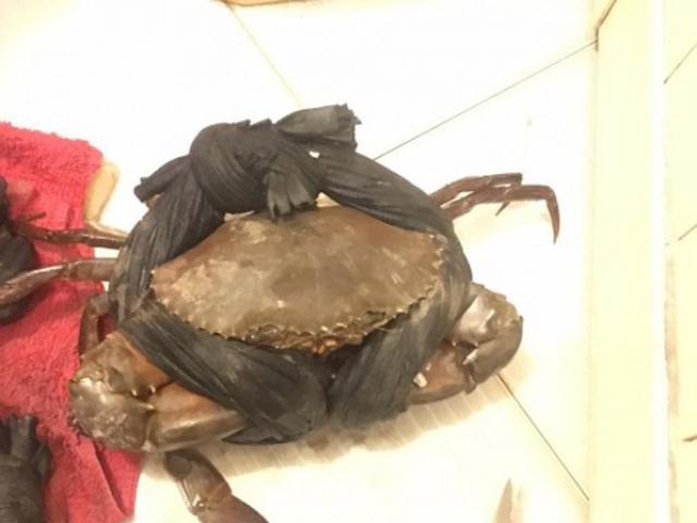 Khóc thét, mua 10kg cua biển ăn 6kg dây buộc bằng vải xốp ngâm bùn