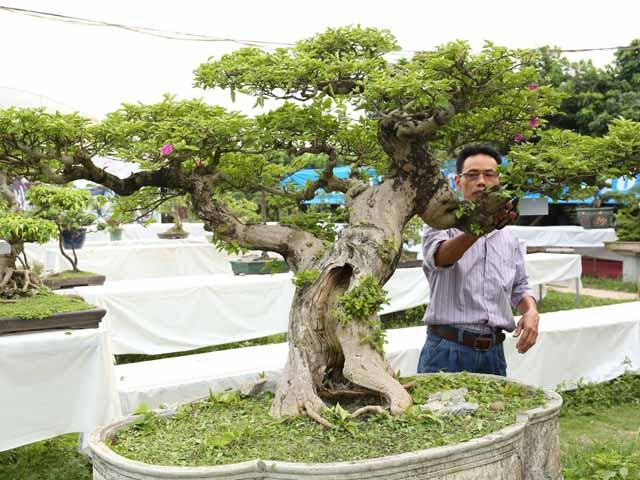 Chiêm ngưỡng những cây bonsai tiền tỷ độc nhất vô nhị ở Hà Nội
