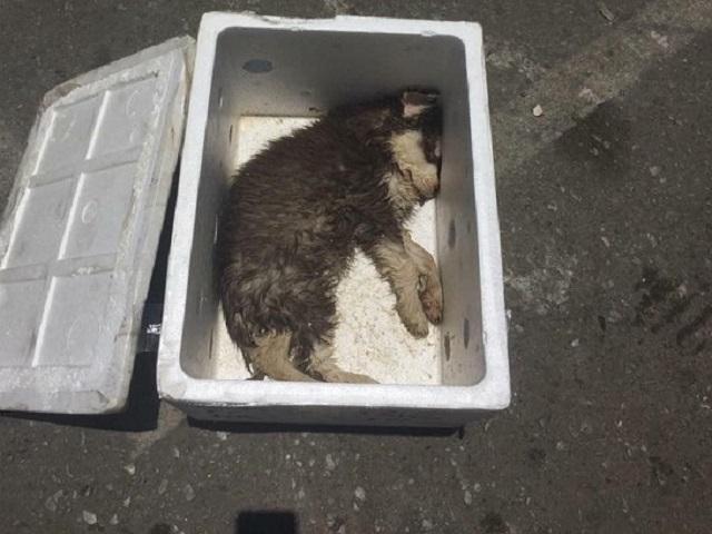 Sự thật nào sau bức ảnh chú chó chết trong thùng xốp đang khiến dân mạng phẫn nộ?