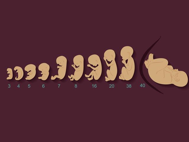 Hành trình 9 tháng kỳ diệu từ khi trứng gặp gỡ tinh trùng diễn ra như thế nào?