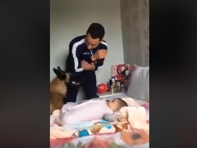 Chú chó một lòng bảo vệ em bé trước những đòn hăm dọa ... vờ vịt từ bố