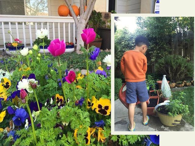 Mẹ Việt ở Mỹ miệt mài trồng 2000 củ hoa rực sắc trong vườn vì con trai bị tự kỷ