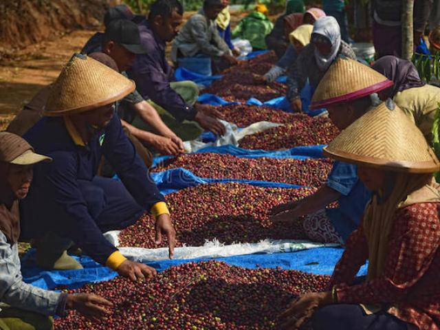 Giá nông sản hôm nay 5/4: Giá cà phê vượt lên trên 37 triệu/tấn, giá tiêu vẫn đi ngang