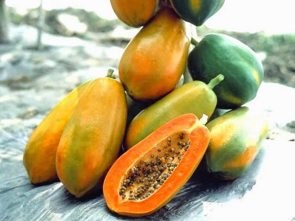 Mùa hè có đủ các loại hoa quả mẹ nên ăn để bầu amp;#34;khỏe reamp;#34;, con lại thông minh - 3