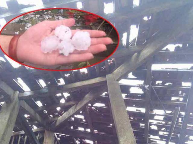 Xót xa hình ảnh nóc nhà thủng lỗ chỗ, vườn mận non dập nát do mưa đá ở Bắc Kạn