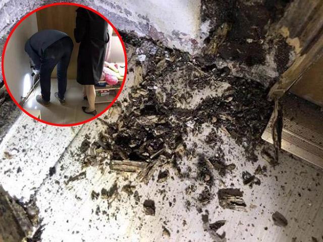 Sàn nhà, cửa bỗng dưng đen sì, chủ nhà đục ra mới phát hiện ấu trùng kinh dị bên trong