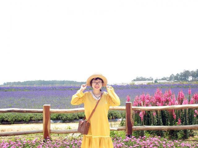 Lịm tim trước cánh đồng hoa lavender tím biếc ở Đà Lạt