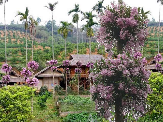 Lạ mà hay: Cho lan sống chung với cây cau, ngắm hoa đẹp ngỡ ngàng