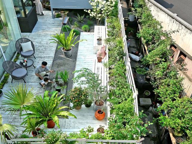 Choáng ngợp vườn hoa gác mái hơn 500 loài của cặp vợ chồng trẻ, ai cũng phải xuýt xoa