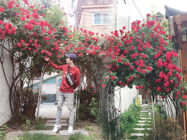 Xuất hiện chiếc cổng hoa hồng đẹp hơn trong phim khiến dân mạng... gào thét: Sao đẹp quá đáng!