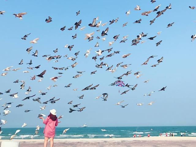 Bình yên bên bờ biển và ngắm bồ câu giữa lòng thành phố Đà Nẵng