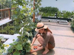 Vườn rau trái mướt mắt đủ loại ngon sạch trên sân thượng của Hoa hậu Quý bà Phương Lê