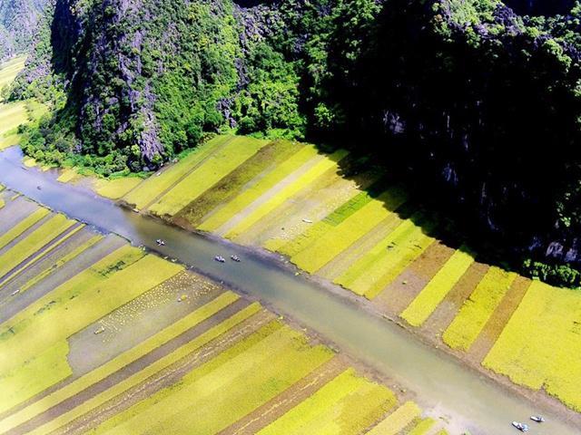 Đẹp mê mải cảnh lúa chín phủ vàng nhìn từ Vạn Lý Trường Thành của Việt Nam