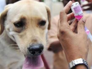 Hà Nội: Nữ bác sĩ thú y tử vong sau gần 2 tháng bị chó ốm cắn vào tay