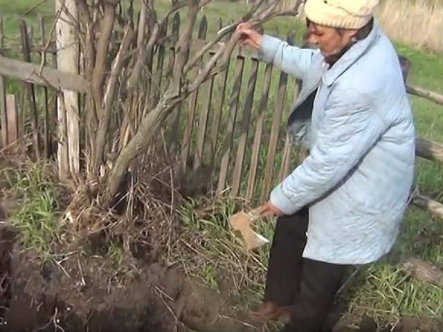 Lời trấn an ám ảnh của người đàn bà giết chồng cũ, giấu xác trong vườn