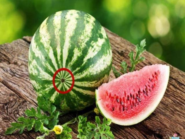 Mẹo chọn dưa hấu cực ngon 100 quả như 1 trong mùa hè