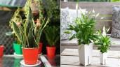 """4 loại cây cảnh đẹp nhất định nên trồng trong nhà vì có tác dụng lọc không khí """"cực đỉnh"""""""