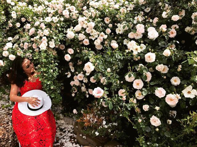 Hàng rào hoa hồng đẹp như mơ trong khu vườn sạch vạn người thèm của mẹ Việt ở Mỹ