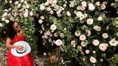 """Hàng rào hoa hồng đẹp như mơ trong khu vườn sạch """"vạn người thèm"""" của mẹ Việt ở Mỹ"""