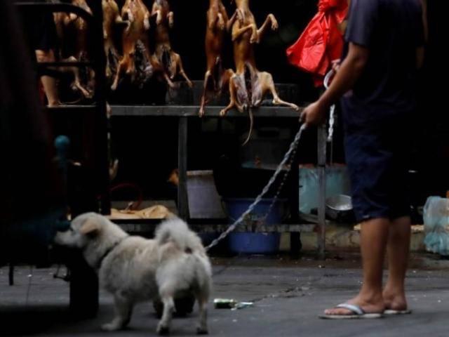 Dân Trung Quốc hết lời bênh vực lễ hội thịt chó