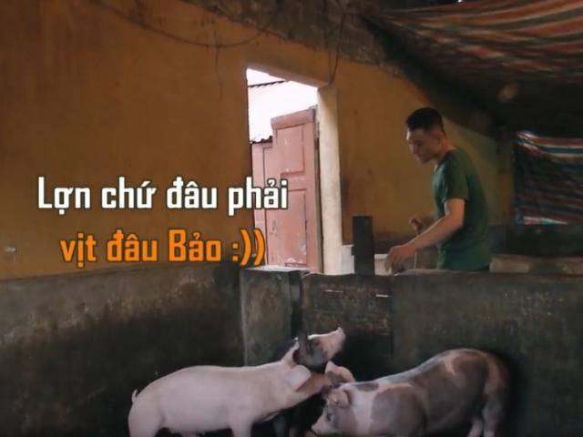 Sao Nhập Ngũ: Phì cười khi 3 anh em sao Việt mặc quần đùi đi tắm cho lợn