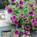 Nhà đẹp - Các loài hoa nên trồng vào mùa hè