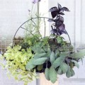 Nhà đẹp - Tự làm vườn treo trồng rau trong bếp