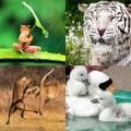 Tin tức - Ảnh đẹp: Màn 'đấu võ' ngoạn mục của sư tử