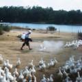 Tin tức - Virus cúm gia cầm H7N9 lây từ người sang người