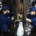 Xem & Đọc - Amazing Race: Siêu mẫu đi... vắt sữa bò