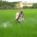 Mua sắm - Giá cả - 51% lượng thuốc trừ sâu nhập khẩu từ TQ