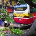 Tin tức - HN: Mưa lớn, cây đổ đè bẹp một xe buýt đang chạy