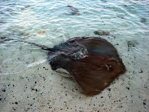 tham maldives - quoc dao xinh dep se bi chim cua trai dat - 5