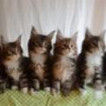 Clip Eva - Những chú mèo con đồng diễn cực đáng yêu