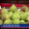 Mua sắm - Giá cả - Hé lộ nguyên nhân rau quả TQ độc hại vẫn vào VN